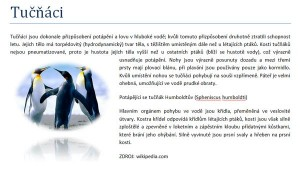 Tučňáci - efekty obrázků